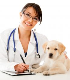 Veterinarians can set dosage for tapeworm pills.