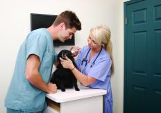 Serious canine illnesses may require that a dog stay at a veterinarian's offices.