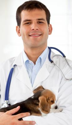 An orthopedic vet holding a puppy.