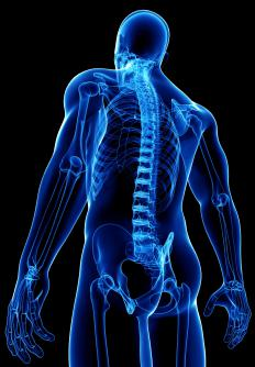 The central nervous system consists of the brain and spinal cord.