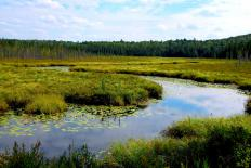 In some areas, groundwater is discharged into wetlands.