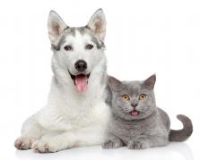 Glucose test strips are available for diabetic dogs and cats.