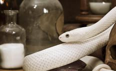 Snakes are one kind of animal that people might need help removing from their home.