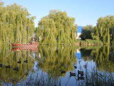 The thin branches of willow trees make them ideal for weaving.