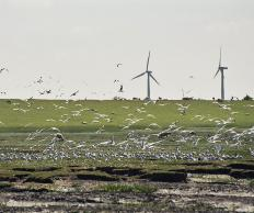 Several scientific organizations have documented the threat that wind farms pose to migratory birds.