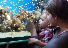 A saltwater aquarium is a contained aquatic environment within which marine plants and animals are maintained.