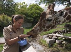 A zookeeper is responsible for feeding,cleaning, and spending time with animals.
