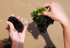 Seaweed is rich in vitamins, minerals and other nutrients.