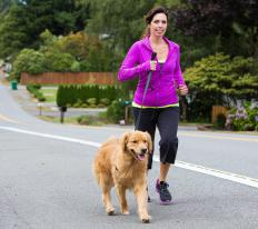 Dogs like to go for walks and a 20-minute daily walk is typically recommended for most breeds.
