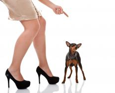 Providing supervision and correcting the dog for unacceptable chewing may help stop the behavior.