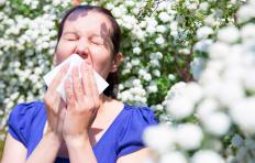 Leukotrienes cause a person to sneeze when exposed to allergens.