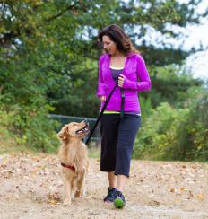 Talking a slow, stress-free walk each day with a pregnant dog is a good idea.