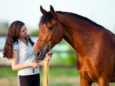 A longe line is a tool used in horse training to work a horse on the ground without a rider.