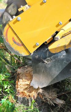 A stump grinder has a rapidly rotating blade that bites into the tree stump and shreds it into mulch or sawdust.