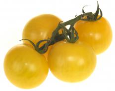 Yellow tomatoes on a vine.