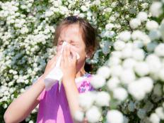 Allergy desensitization may be used to treat pollen allergies.