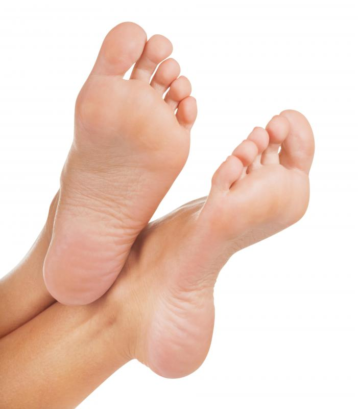 The soles of the feet contain eccrine glands.