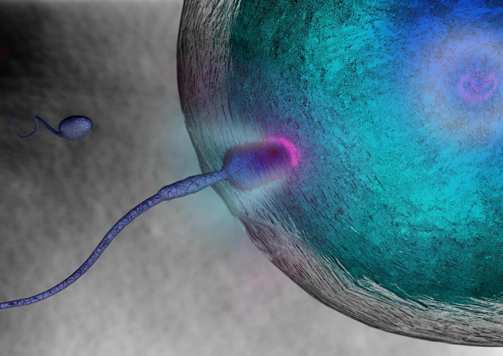 The sex cells, gametes, each have 23 chromosomes.