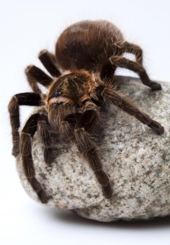 Less interactive pets, such as spiders, are generally low maintenance.