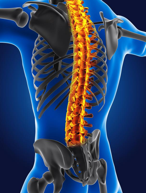 A peripheral nerve transmits messages to and from the spinal cord.