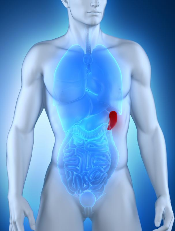An enlarged spleen is one of the most common examples of organomegaly.