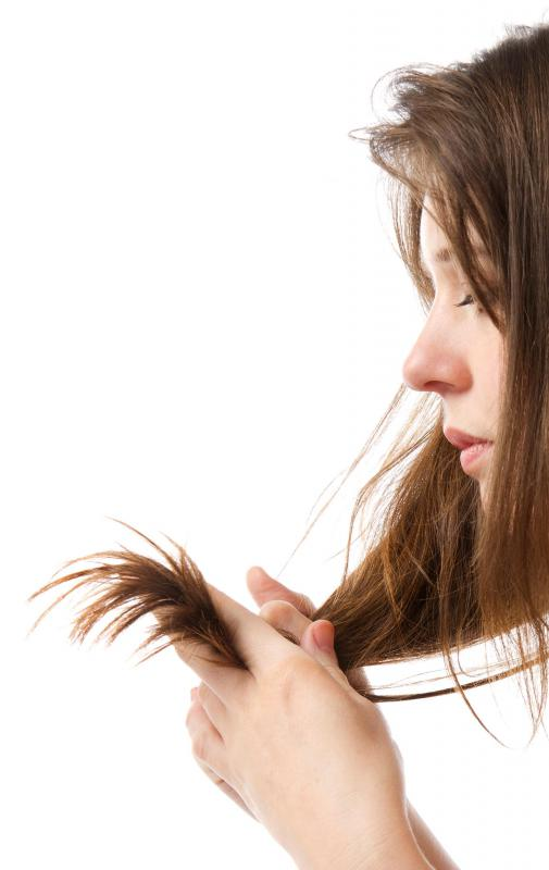 Damaged hair cuticles lead to split ends.