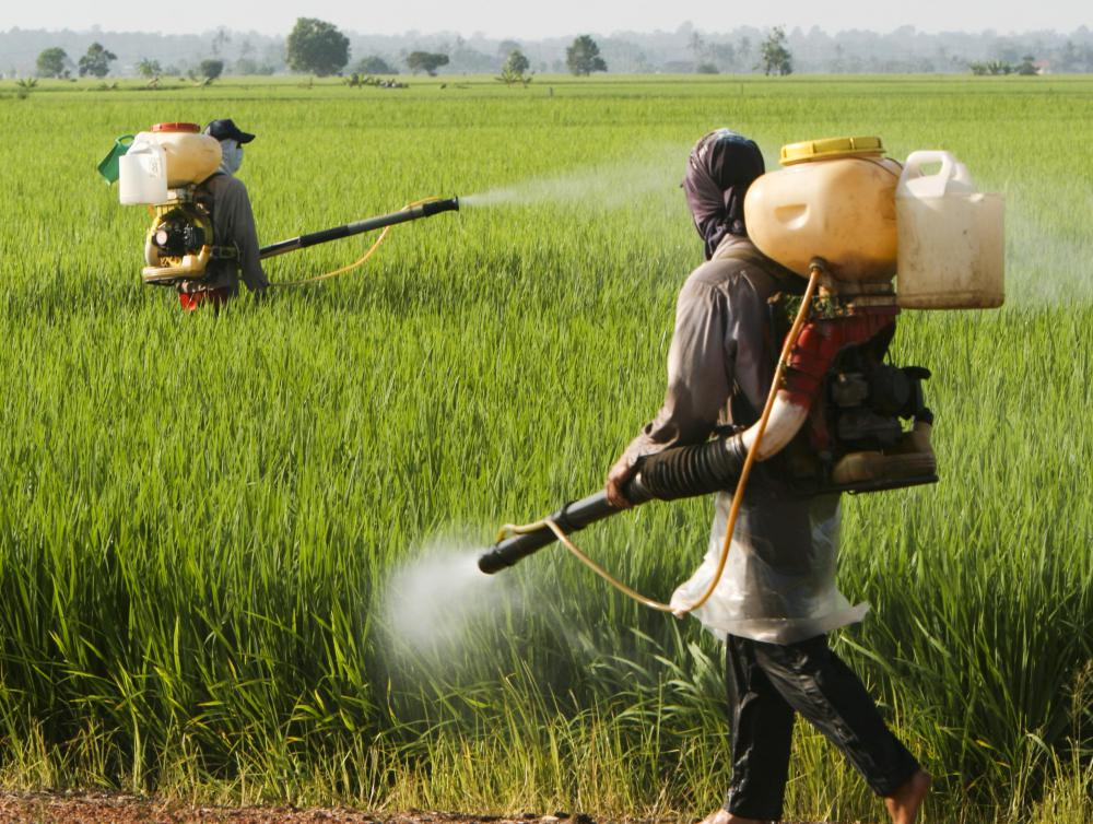 It is crucial to avoid direct contact with permethrin while spraying crops.