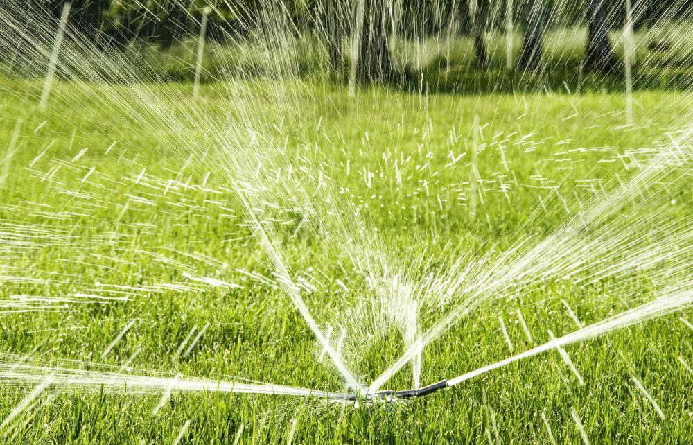 A combination of regular watering and fertilizer may help revitalize soil.