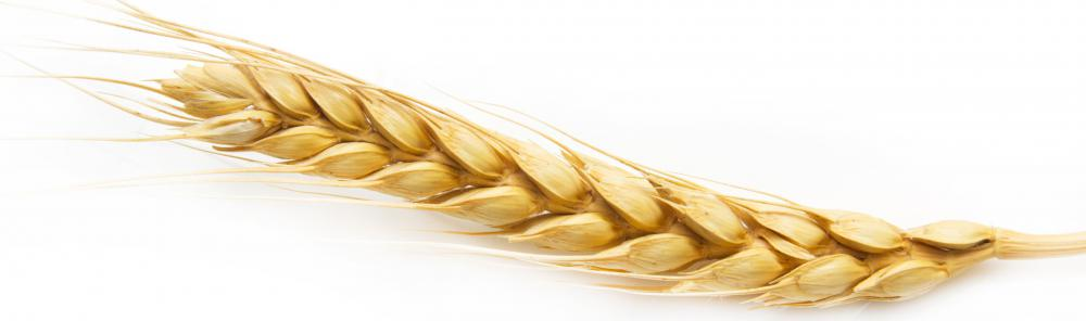 A head of barley.