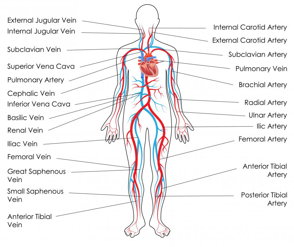 Peripheral Artery Diagram - Tools •