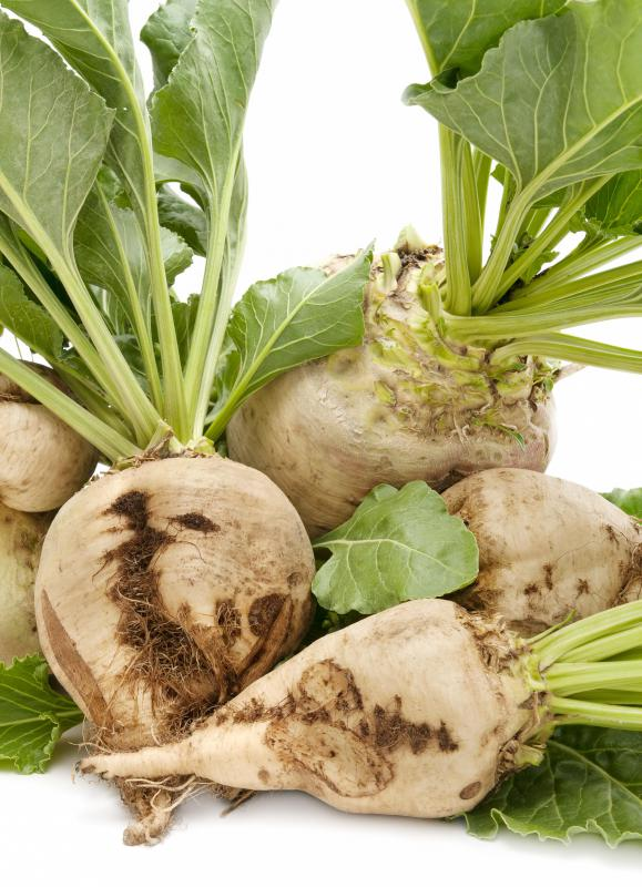 Distilleries may use sugar beets to produce the ethanol that becomes gasohol.
