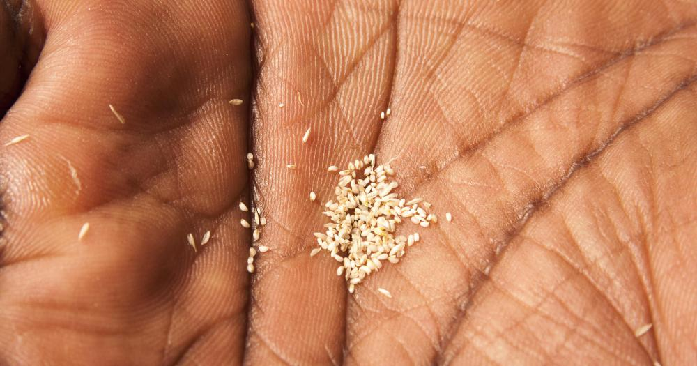 Related to millet, teff is a small, gluten-free grain that can be used in breads, such as injera, and cereals.