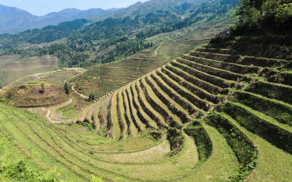 Terraces are an ancient method of farming that creates more usable land.