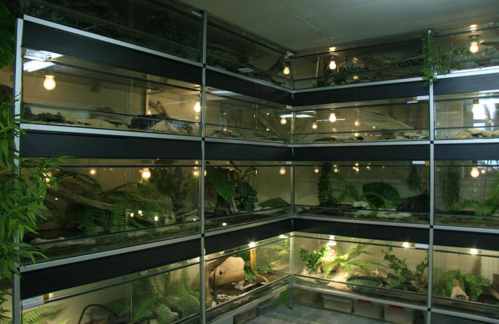 Small plants and animals are kept in terrariums.