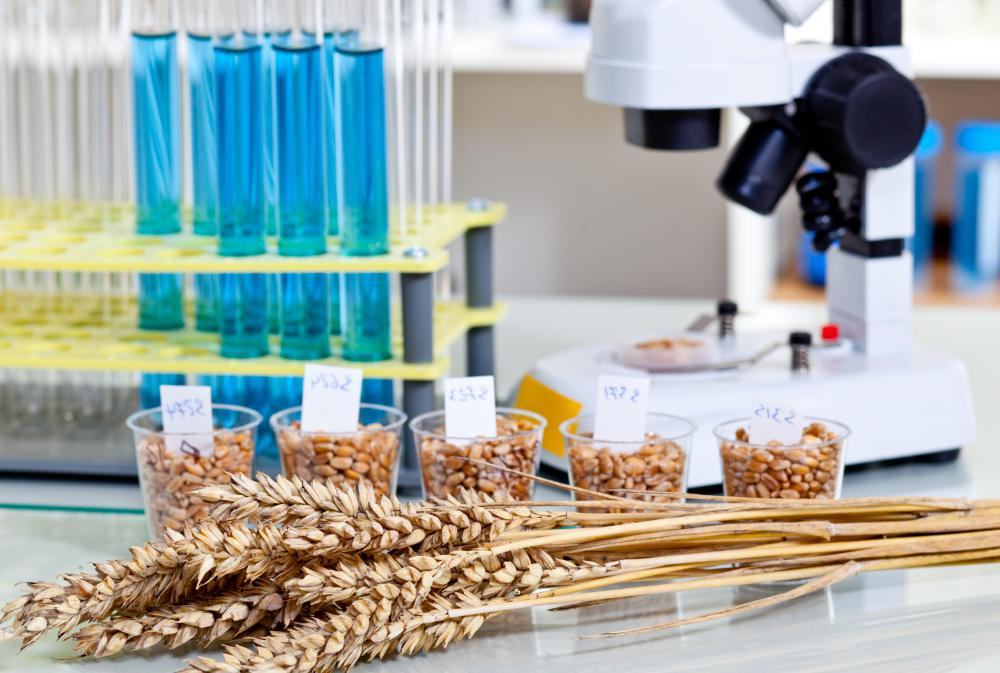 A geneticist may have a job involved with improving and creating crops.