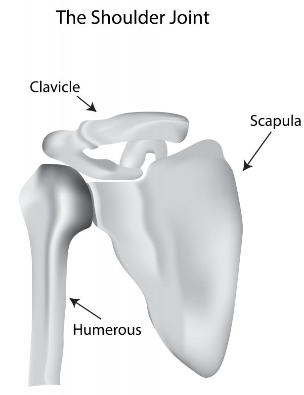 Flexion occurs at the shoulder joint, which is a ball-in-socket joint.