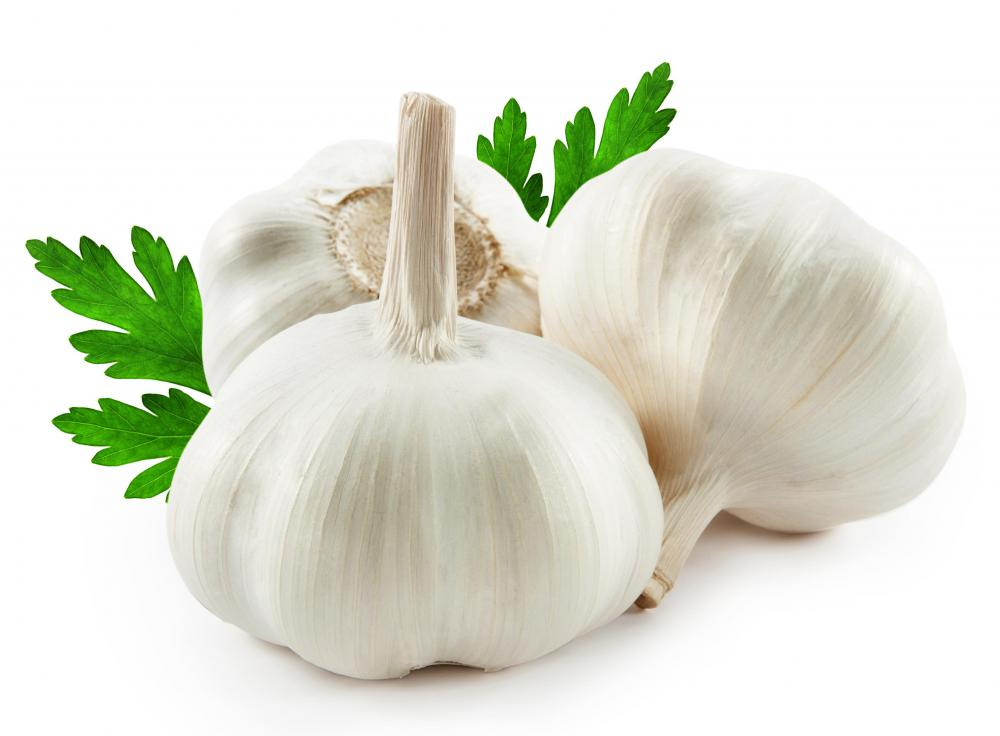 Garlic images