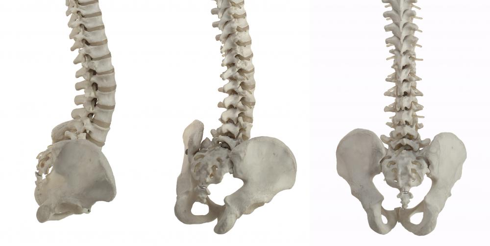 The tailbone, or coccyx, is the lowest segment of the spinal column.