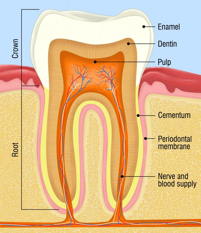 Enamel hypoplasia can make the surface of a tooth rough.