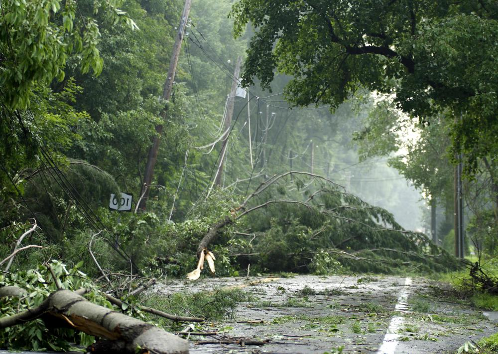 Wet trees and branches falling on uninsulated power lines can cause electrical short circuits.