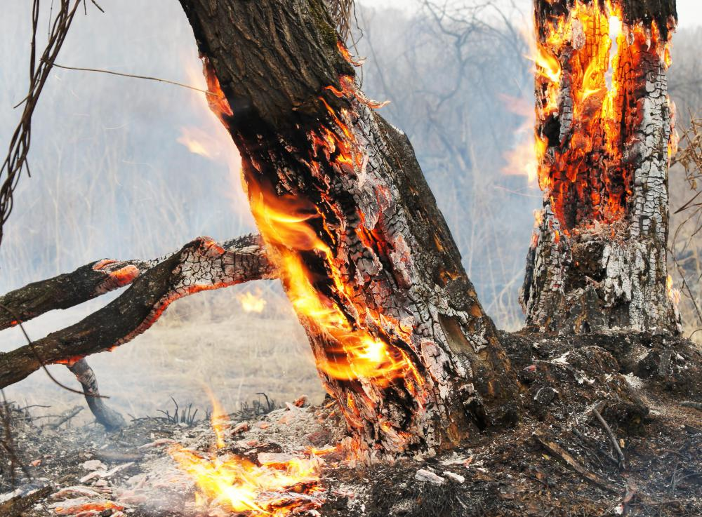 Forest fires can create naturally occurring airborne particles.