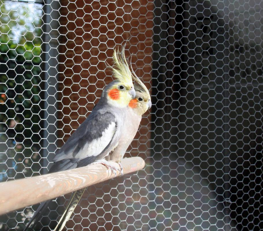 Cockatoos are considered to be intelligent and social birds.