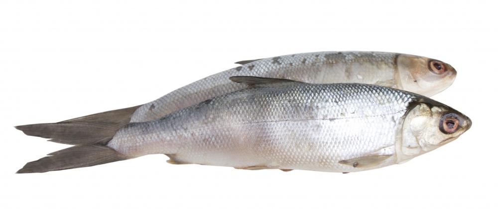 Spanish sardines are a good source of Omega-3 fatty acids.