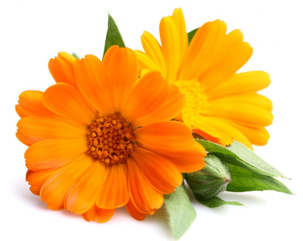 Marigolds are edible flowers.