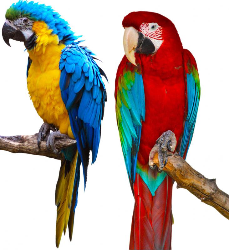 Exotic birds, such as macaws, live in the rainforest.