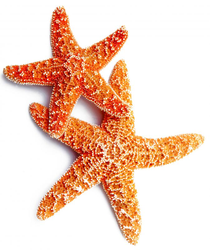 Starfish are one of the oyster's predators.