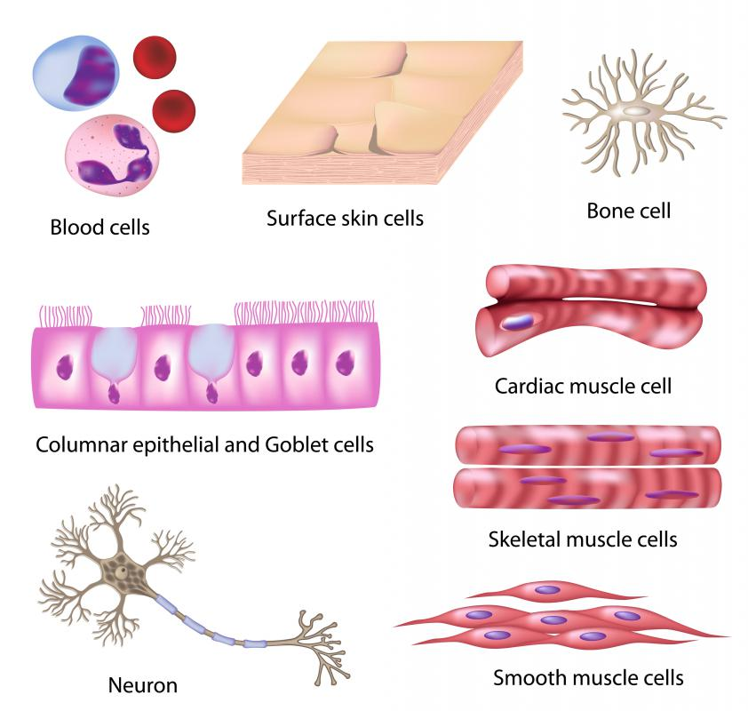 Different types of cells.