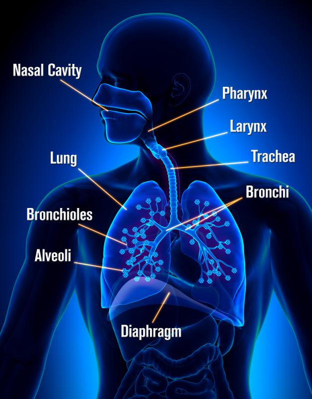 Mucosa is commonly found in the respiratory tract.