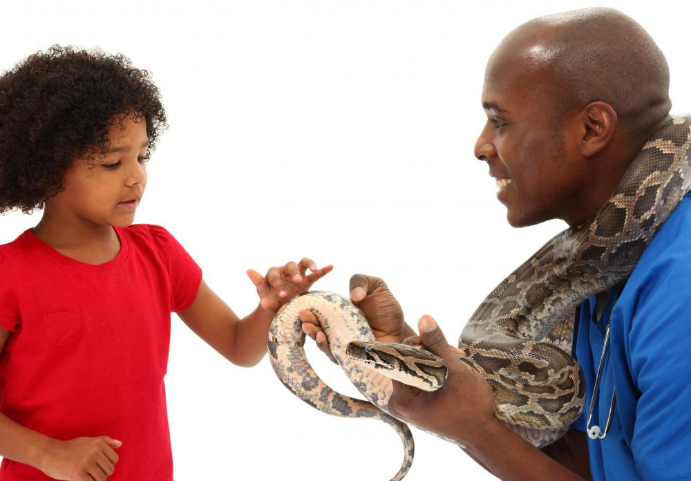 What can I do to become a vet but if you are only young?