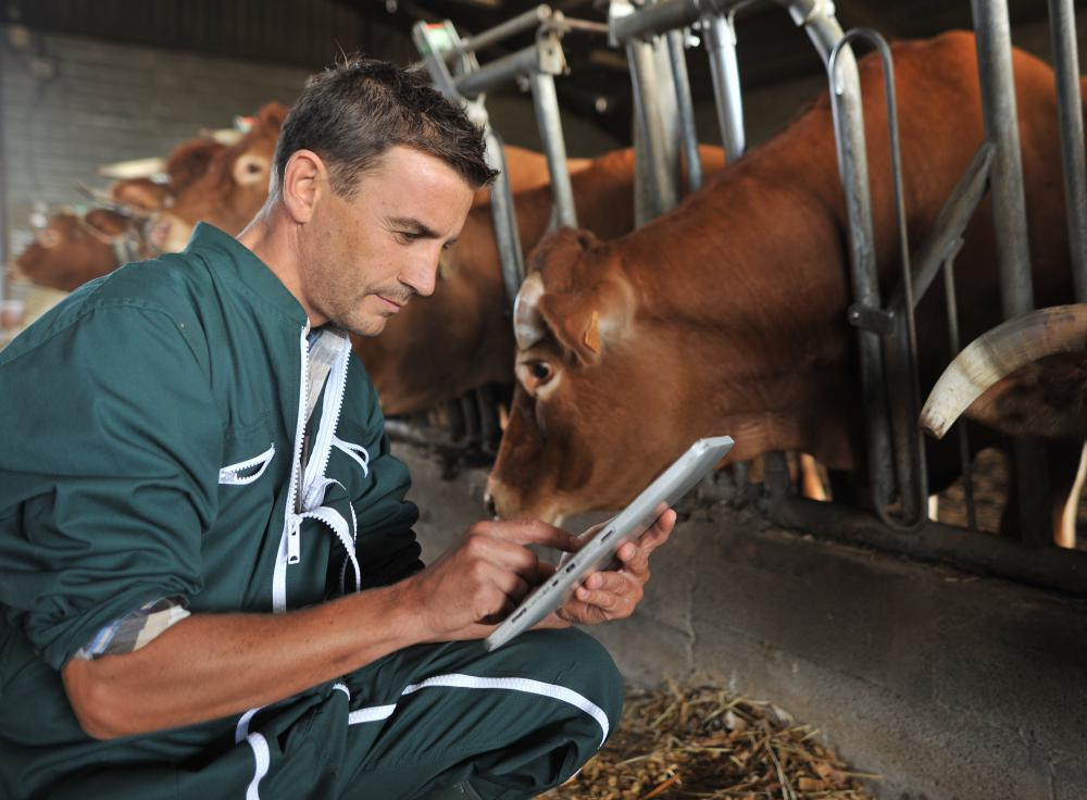 Veterinarians and government inspectors routinely inspect livestock for signs of BSE.